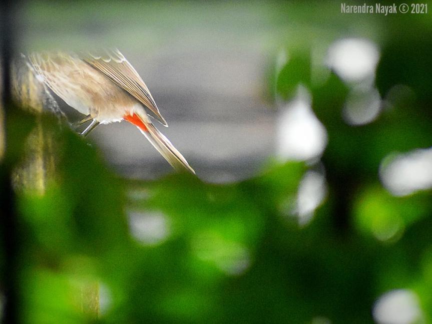 Bird, Decollated!